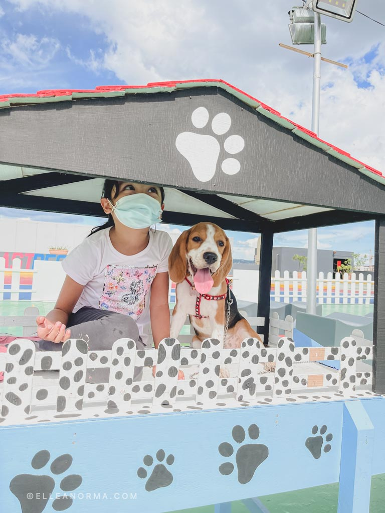 Kerrigan-Dashi-chilling-in-the-dog-house
